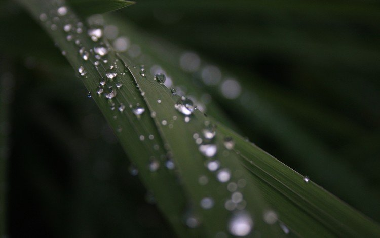 трава, природа, фон, роса, капли, растение, grass, nature, background, rosa, drops, plant