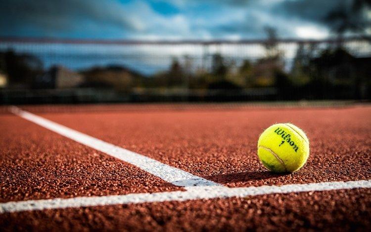 sport, the ball, tennis, tennis ball
