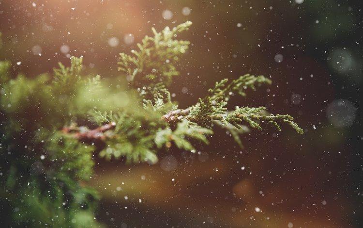 ветка, снег, природа, зима, макро, фон, растение, branch, snow, nature, winter, macro, background, plant
