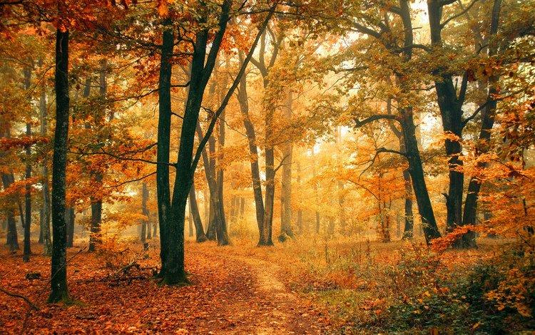 деревья, природа, лес, листья, осень, тропинка, trees, nature, forest, leaves, autumn, path