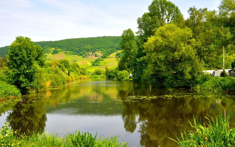 река, зелень, лес, лето, германия, мозель, river, greens, forest, summer, germany, moselle