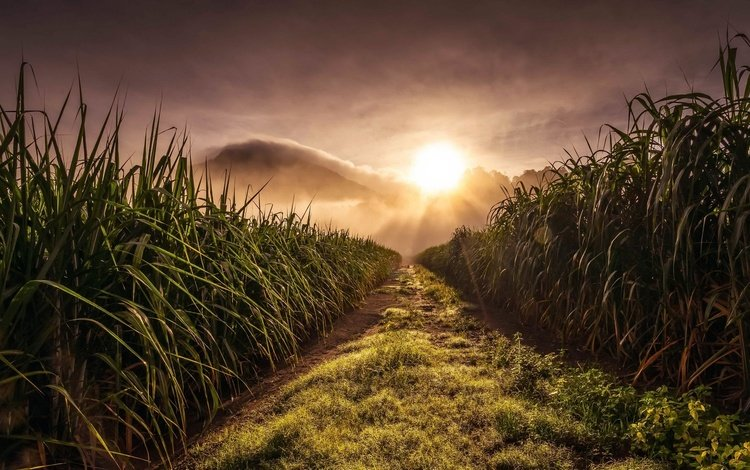 трава, природа, пейзаж, утро, поле, рассвет, grass, nature, landscape, morning, field, dawn