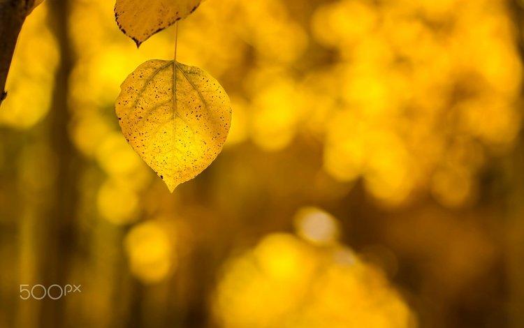 природа, листья, макро, фон, осень, nature, leaves, macro, background, autumn