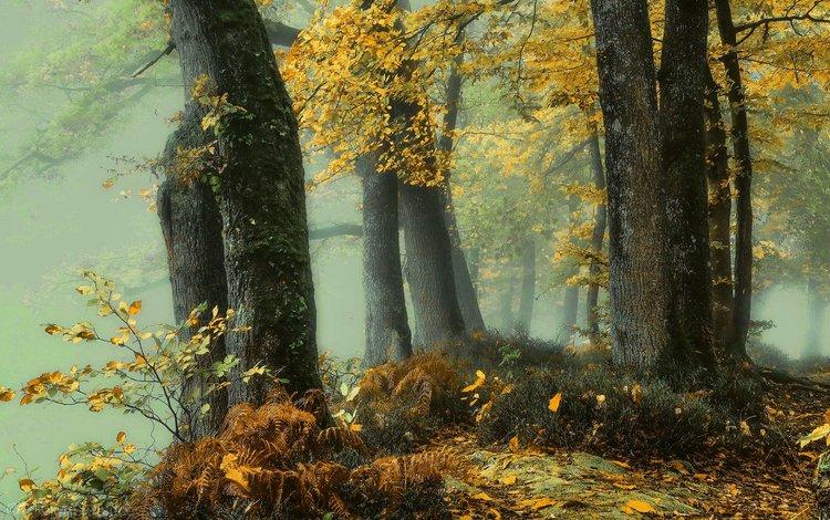 деревья, природа, лес, листья, туман, осень, trees, nature, forest, leaves, fog, autumn