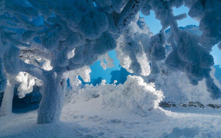 деревья, снег, природа, зима, trees, snow, nature, winter