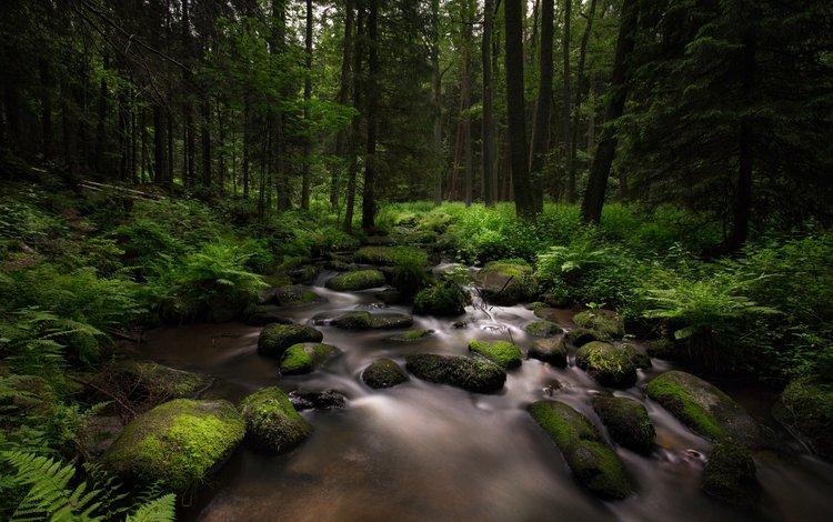 деревья, камни, лес, ручей, мох, папоротник, lena held, trees, stones, forest, stream, moss, fern
