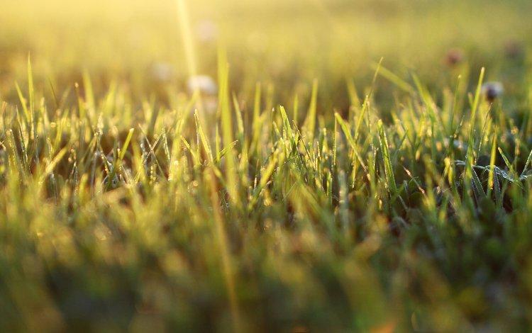 трава, природа, макро, фон, grass, nature, macro, background