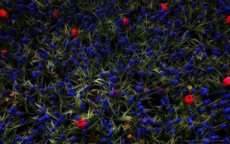цветы, трава, бутоны, flowers, grass, buds