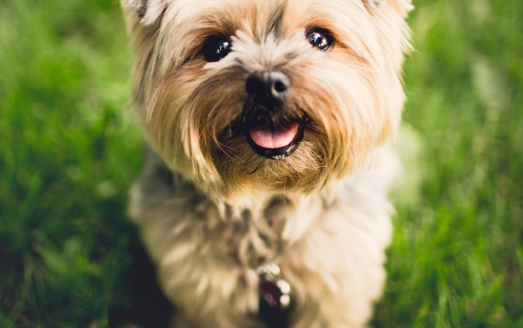 eyes, look, dog, puppy