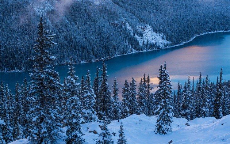 река, природа, лес, зима, river, nature, forest, winter