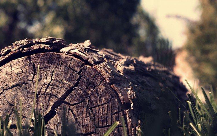 трава, дерево, макро, бревно, grass, tree, macro, log