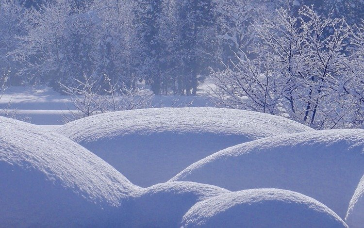 деревья, снег, природа, лес, зима, сугробы, trees, snow, nature, forest, winter, the snow