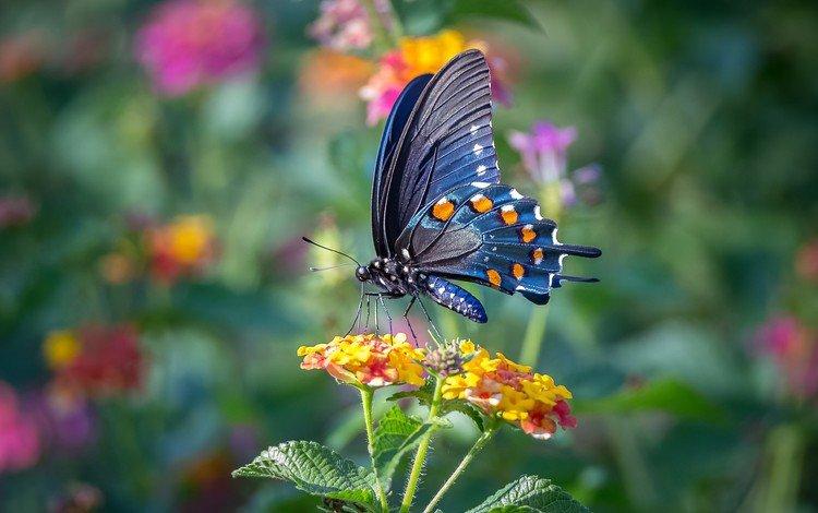 цветы, макро, насекомое, бабочка, крылья, flowers, macro, insect, butterfly, wings