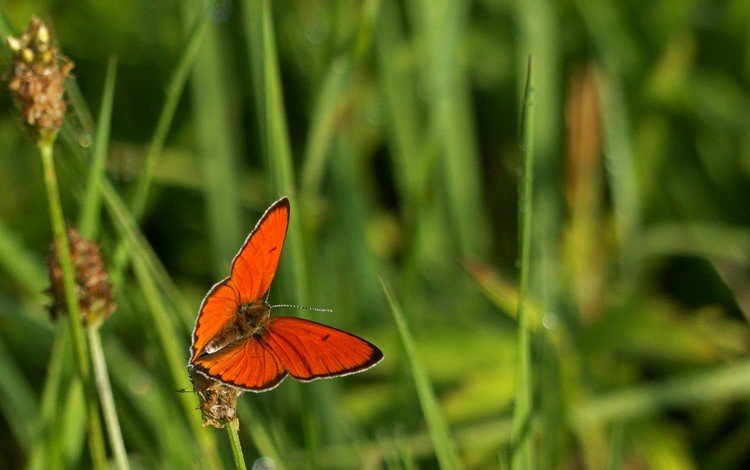 трава, макро, насекомое, бабочка, крылья, grass, macro, insect, butterfly, wings