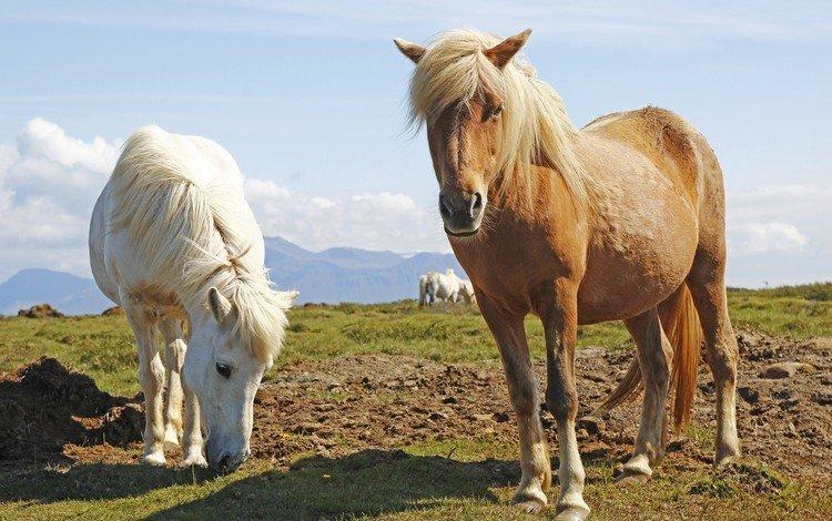 трава, животные, лошади, кони, пастбище, grass, animals, horse, horses, pasture