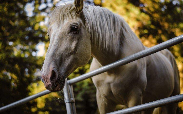 лошадь, деревья, фон, ограждение, конь, horse, trees, background, the fence