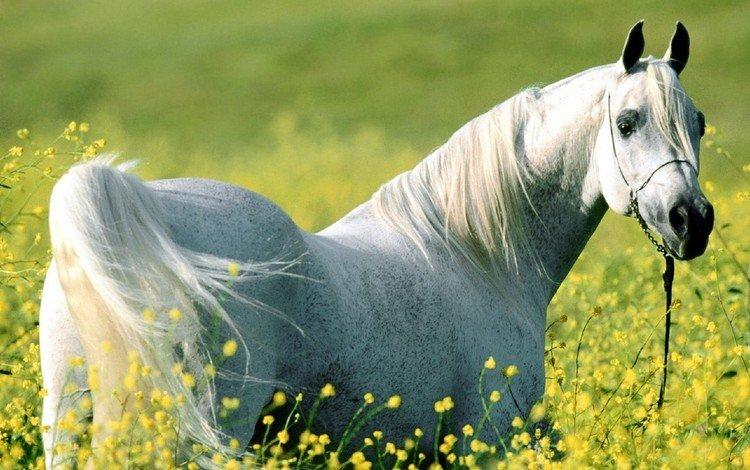 цветы, лошадь, луг, конь, flowers, horse, meadow