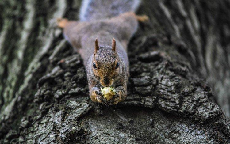 дерево, белка, орех, белочка, tree, protein, walnut, squirrel