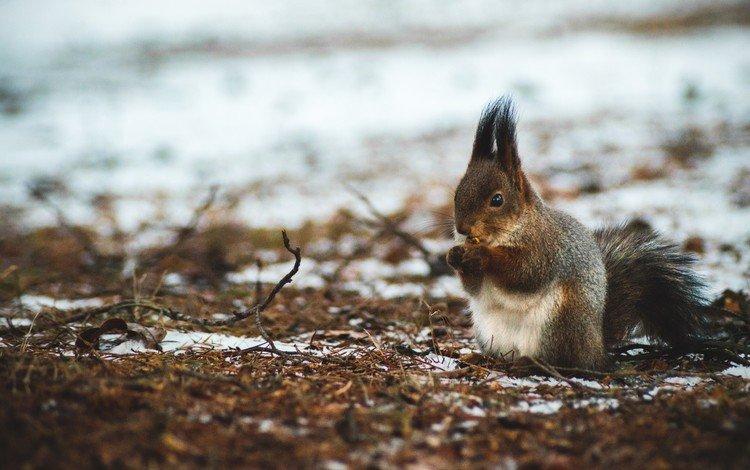 природа, лес, орехи, зима, белка, боке, белочка, nature, forest, nuts, winter, protein, bokeh, squirrel