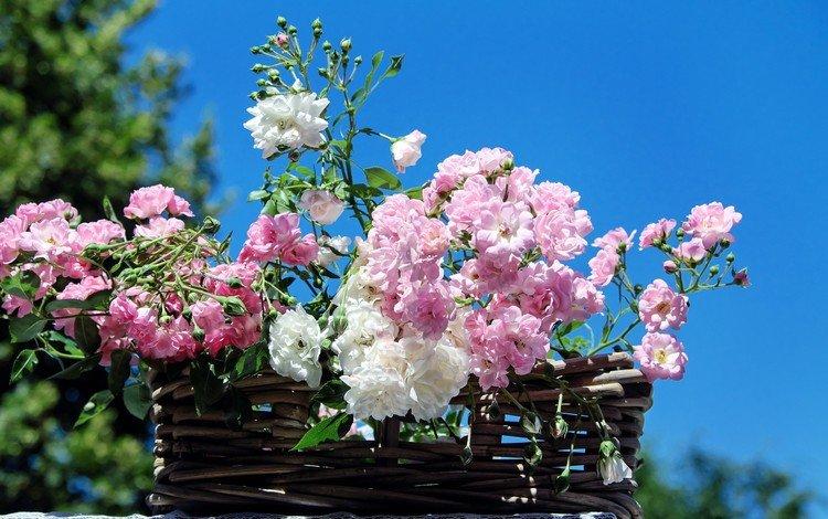 небо, цветы, розы, лепестки, корзина, the sky, flowers, roses, petals, basket