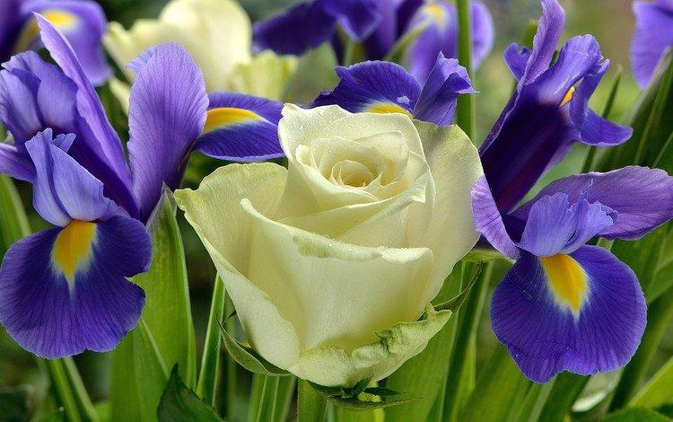 цветы, розы, букет, ирисы, flowers, roses, bouquet, irises