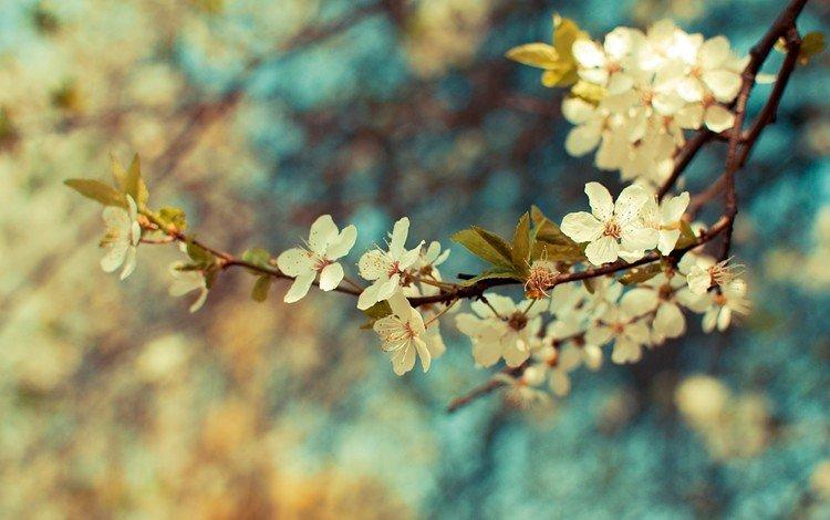 цветы, ветка, цветение, листья, весна, flowers, branch, flowering, leaves, spring