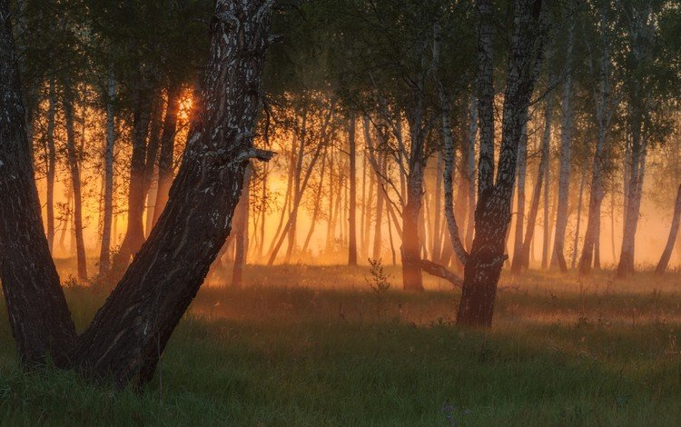 деревья, вечер, солнце, лес, закат, лучи, туман, trees, the evening, the sun, forest, sunset, rays, fog