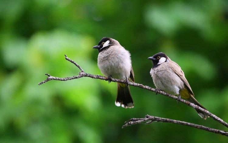 природа, ветки, птицы, клюв, воробей, nature, branches, birds, beak, sparrow