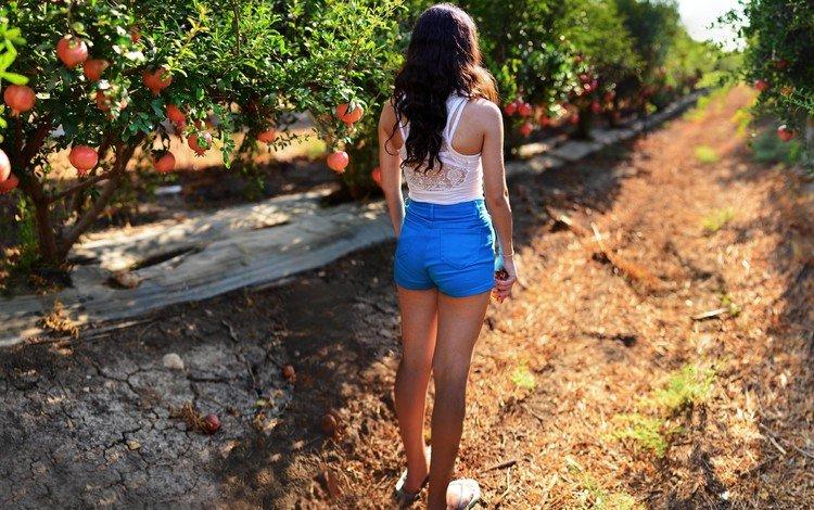 брюнетка, фрукты, сад, спина, волосы, шорты, гранат, солнечный свет, brunette, fruit, garden, back, hair, shorts, garnet, sunlight