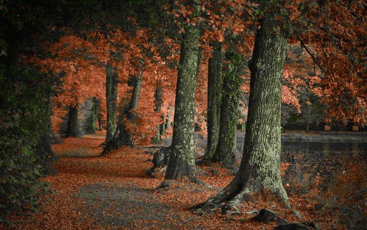 деревья, природа, лес, парк, осень, trees, nature, forest, park, autumn