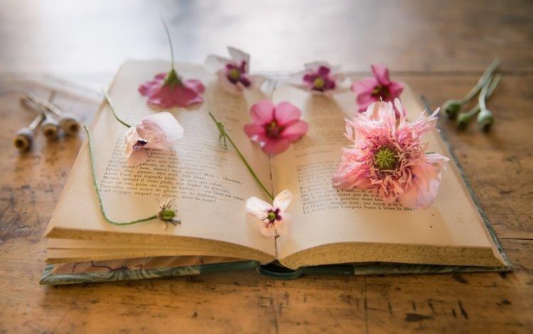 цветы, фон, маки, книга, натюрморт, страницы, фиалки, nathalie le bris, flowers, background, maki, book, still life, page, violet