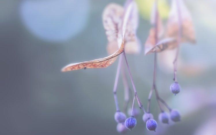 ветка, природа, листья, фон, ягоды, rockinmonique, branch, nature, leaves, background, berries