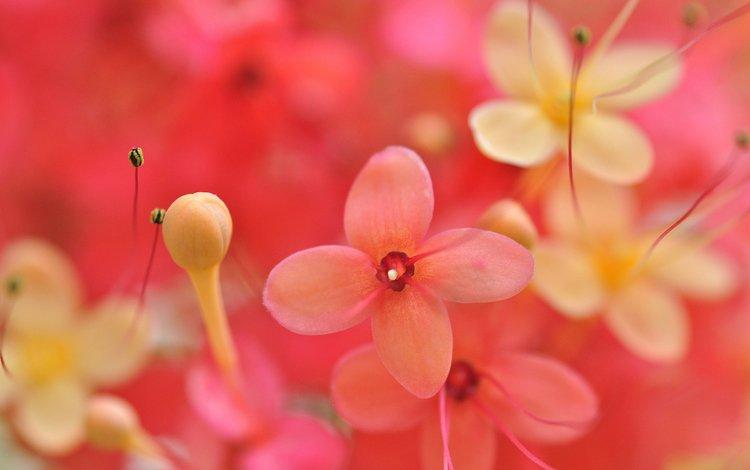 цветы, бутоны, макро, лепестки, размытость, flowers, buds, macro, petals, blur
