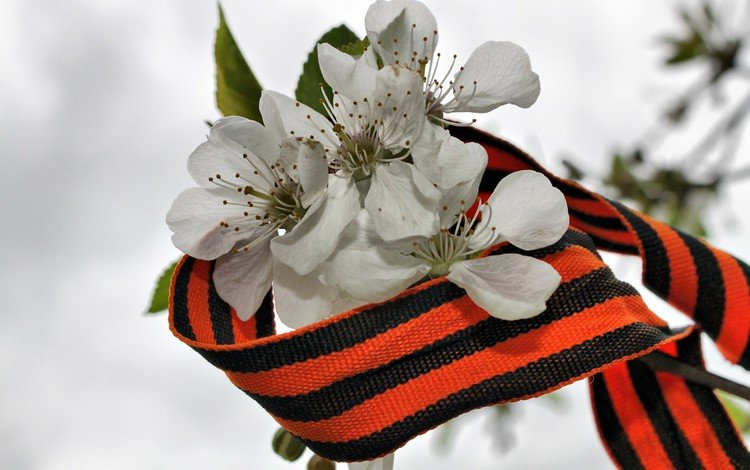 flowers, branch, victory day, apple, may 9, george ribbon