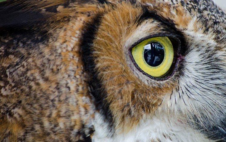 сова, птица, глаз, крупным планом, owl, bird, eyes, closeup