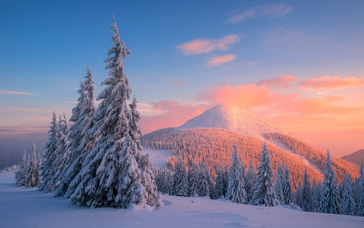 деревья, горы, снег, закат, зима, сосны, карпаты, trees, mountains, snow, sunset, winter, pine, carpathians