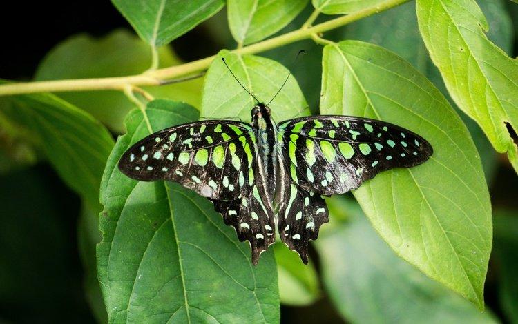 бабочка, butterfly