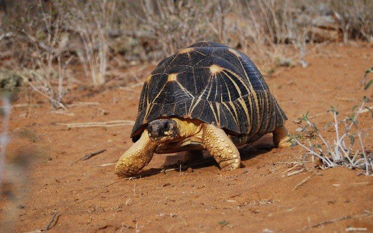 черепаха, панцирь, turtle, shell