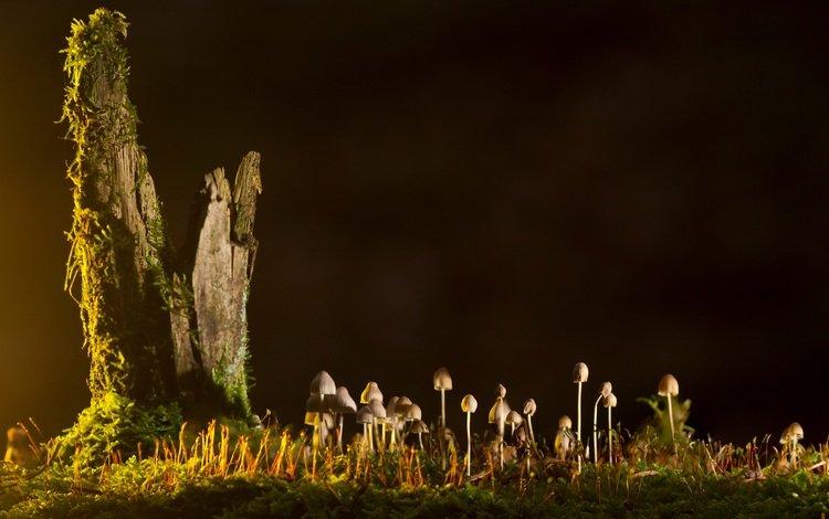 грибы, mushrooms