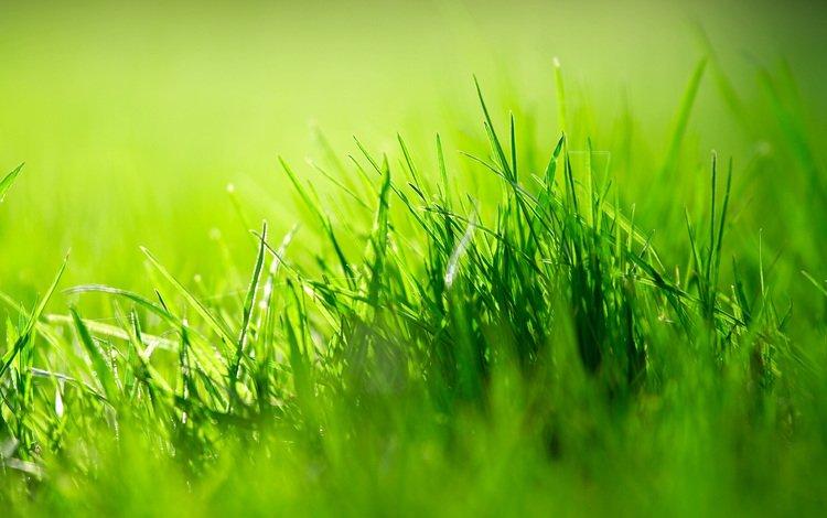 трава, grass