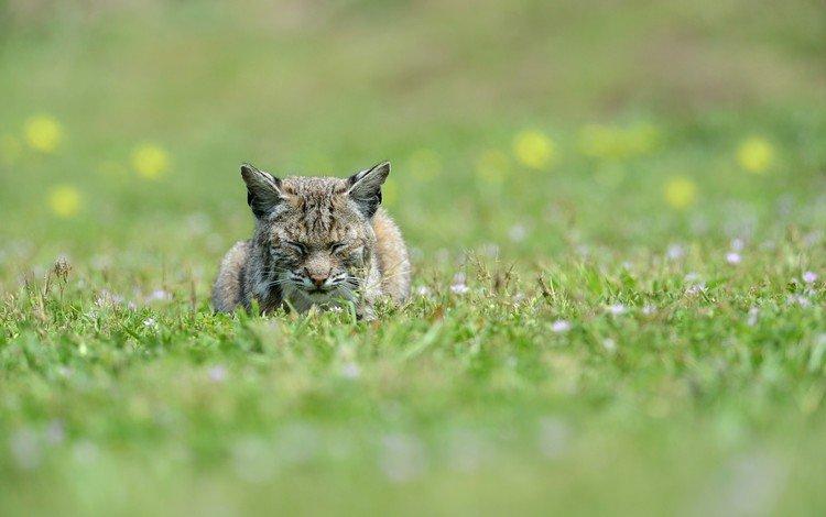 кошка на траве, cat on the grass