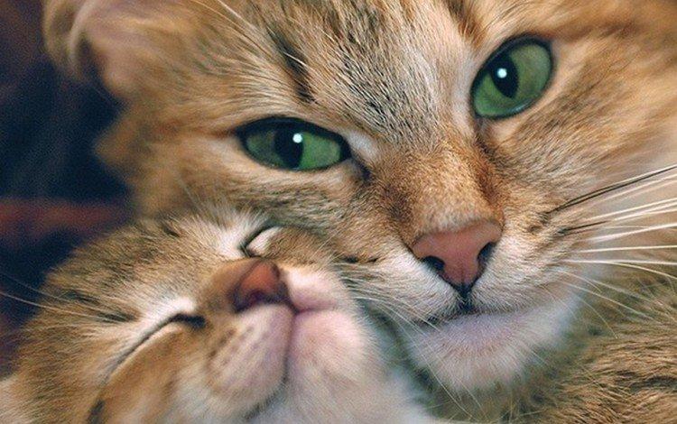 котенок, kitty