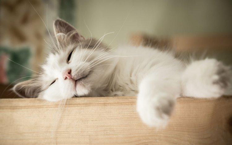кот, мордочка, усы, кошка, сон, котенок, cat, muzzle, mustache, sleep, kitty
