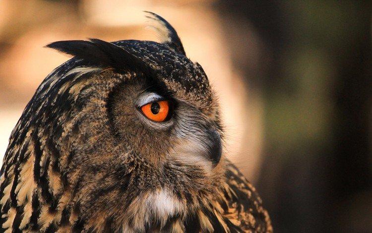 сова, профиль, птица, owl, profile, bird