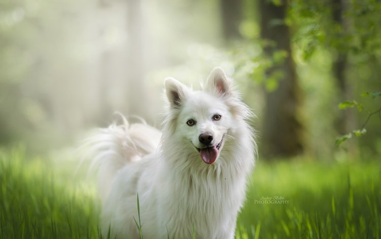 собака, друг, dog, each