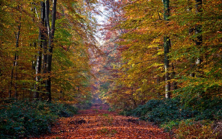 деревья, природа, лес, листья, осень, тропа, trees, nature, forest, leaves, autumn, trail