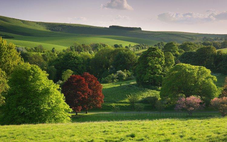 деревья, природа, кусты, лесок, trees, nature, the bushes, grove