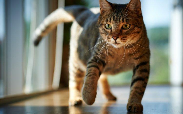кот, мордочка, усы, кошка, взгляд, комната, пол, cat, muzzle, mustache, look, room, floor