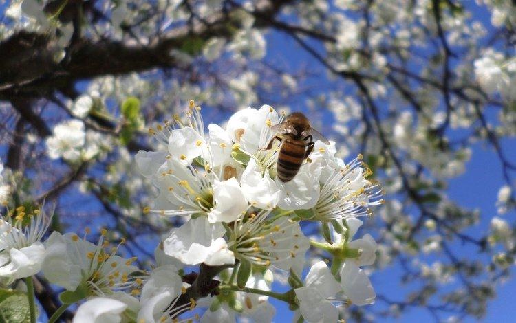 flowering, bee, drain, april