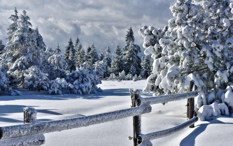 деревья, снег, природа, зима, забор, изгородь, trees, snow, nature, winter, the fence, fence